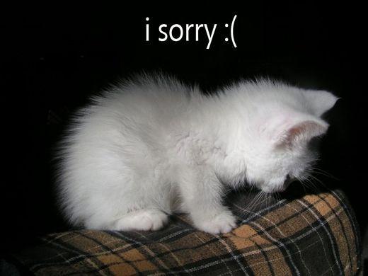 http___3.bp.blogspot.com__ER4qbH2RwFY_TQPi7MDe27I_AAAAAAAAAGA_bvKTIsJjbSU_s1600_sorry+28129